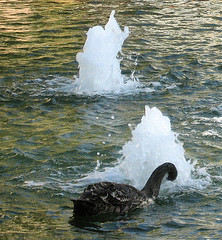 black swan event by Jurvetson