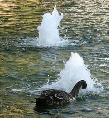 black swan event by Jurvetson